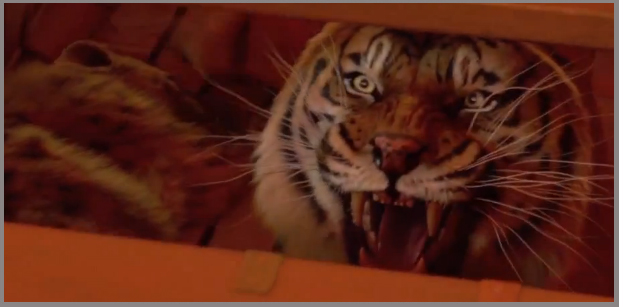 life of pi trailer -- you won cannes
